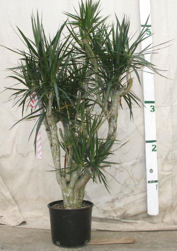Top 15 nasa 39 s plants that can save your life - Best big indoor plants ...