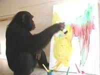 congo el chimpance pintando