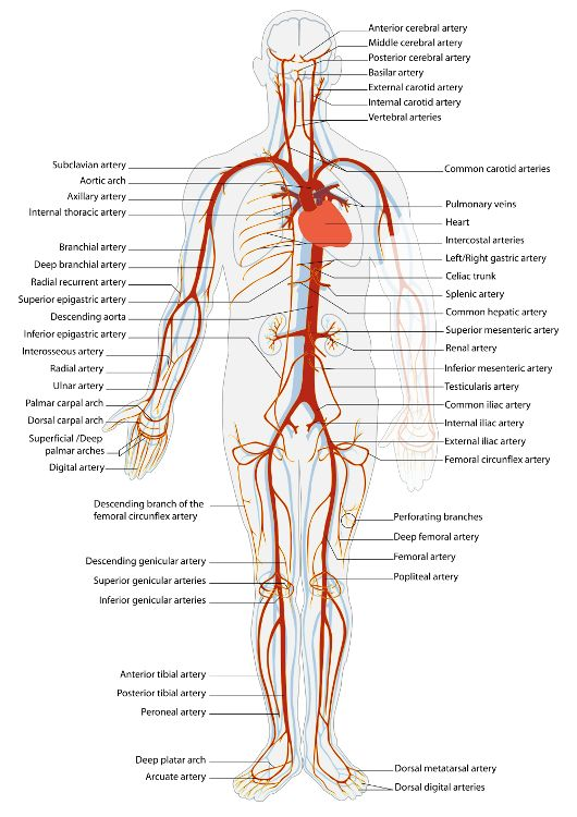 depression boosts peripheral artery disease risk   softpedia