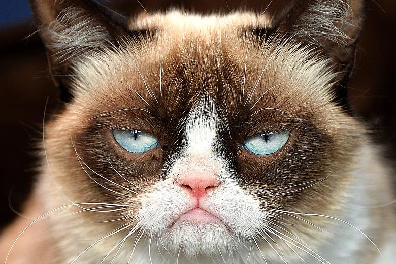 Happy Birthday, Grumpy Cat! The Most Famous Unhappy Feline ...