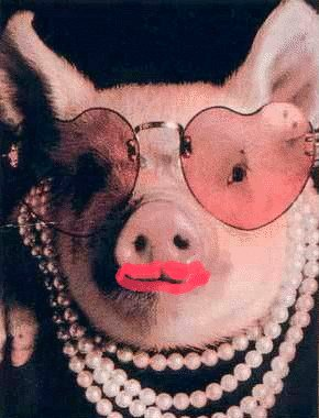 The MSN Messenger kissing pig