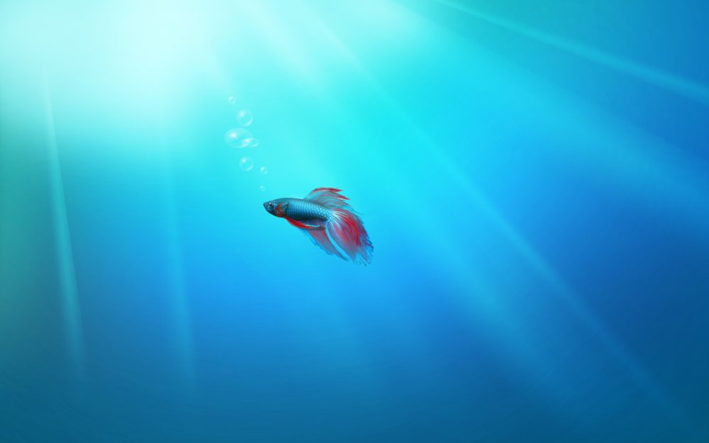 fish. Story of windows 7 blue fish